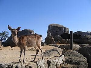 300px-Sneaky_deer[1].jpg
